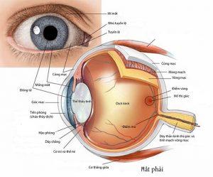Hình vẽ mô phỏng cấu trúc mắt con người